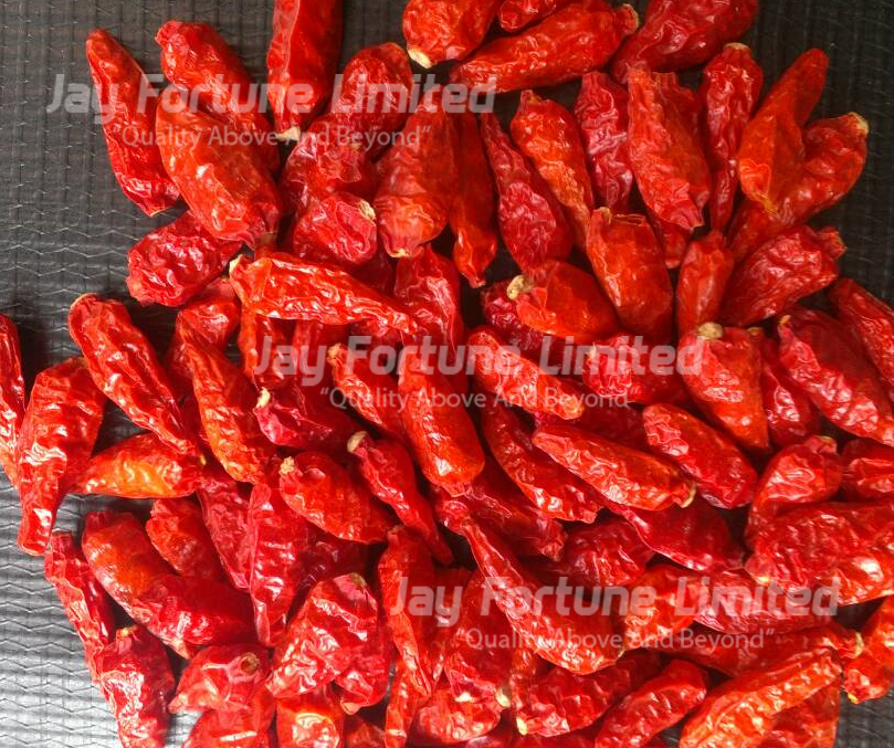 African Bird's Eye Chilli(ABE)| Peri Peri